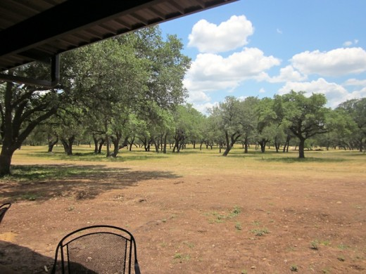 oak grove at the new Hye Meadow Winery in Hye, Texas