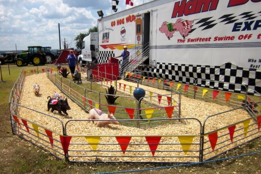 pot-bellied pig races at the Gillespie county fair in fredericksburg, texas