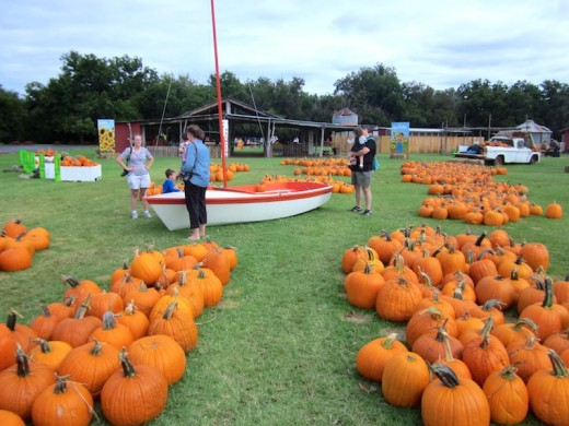 pumpkin patch at Sweet Berry Farm, Marble Falls, Texas