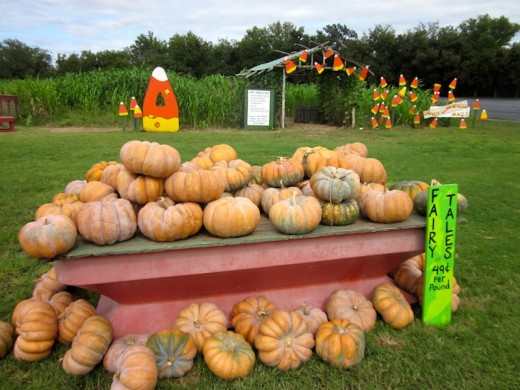 pumpkin patch and maze at Sweet Berry Farm, Marble Falls, Texas