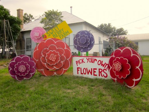 pick your own flowers at Sweet Berry Farm near Marble Falls, Texas