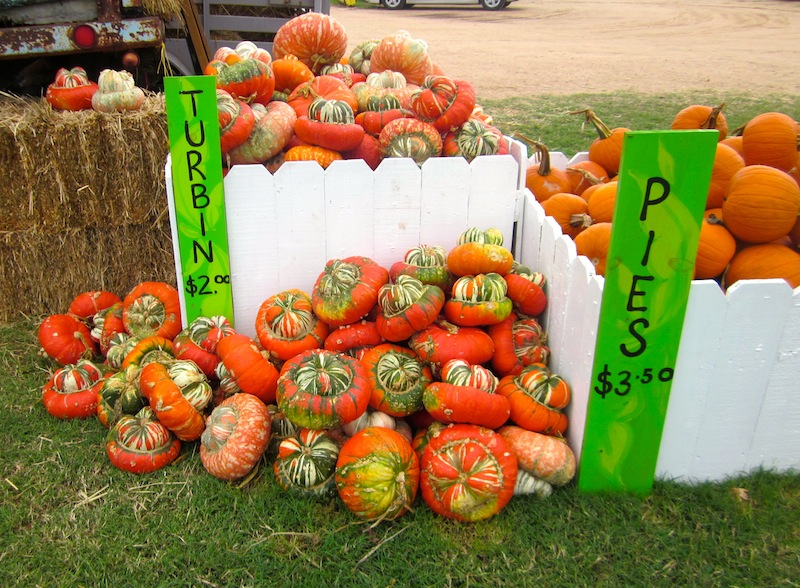 Pumpkins At Sweet Berry Farm Way Out West Austin Way